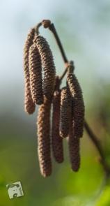 wiosenne macro-0333