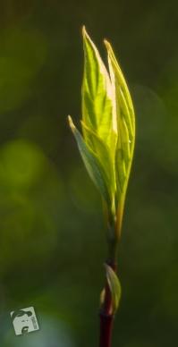 wiosenne macro-0342