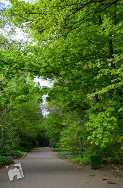 Pgród Botaniczny PAN w Powsinie-0786