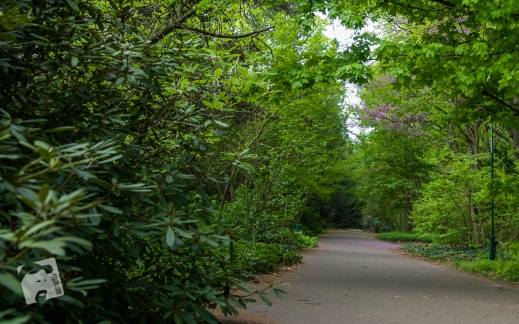 Pgród Botaniczny PAN w Powsinie-0788