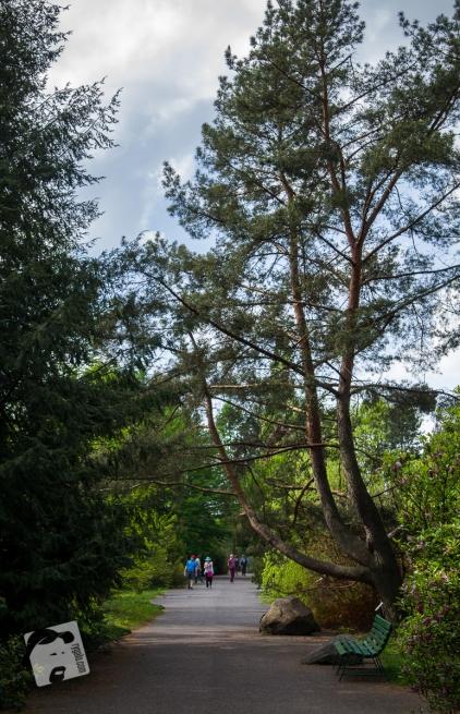 Pgród Botaniczny PAN w Powsinie-0791