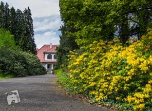 Pgród Botaniczny PAN w Powsinie-0813